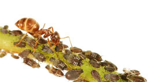 Natural Pest Control for Your Home and Garden