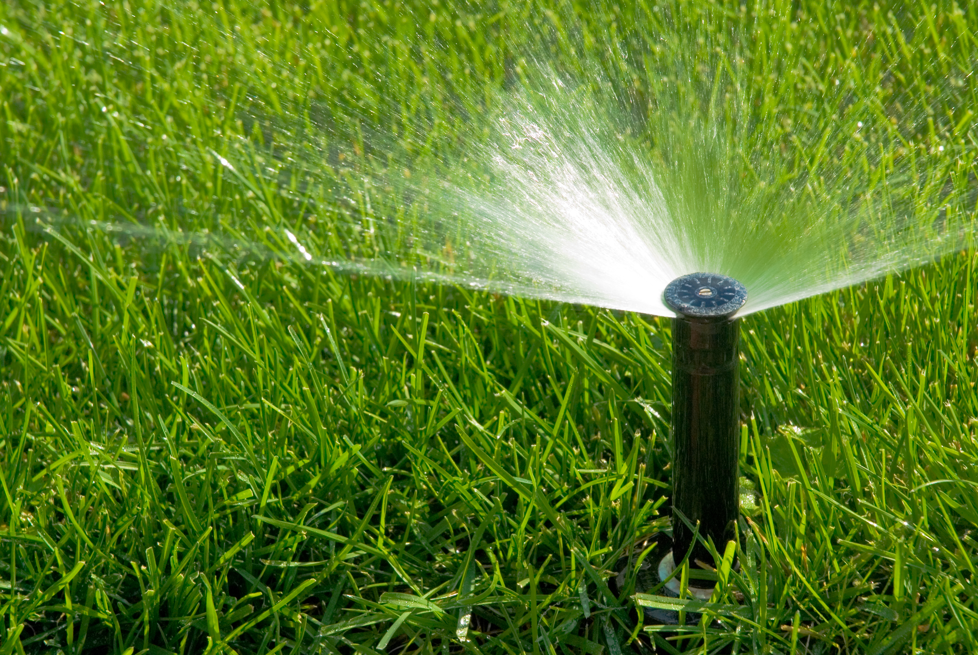 Solution: Timely Watering