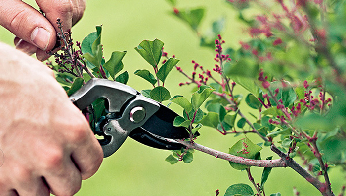 Solution: Research Pruning