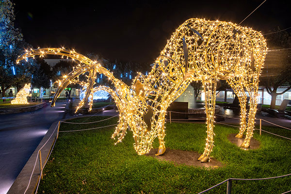 Joburg Zoo Festival of Lights and night market Festive Season Christmas