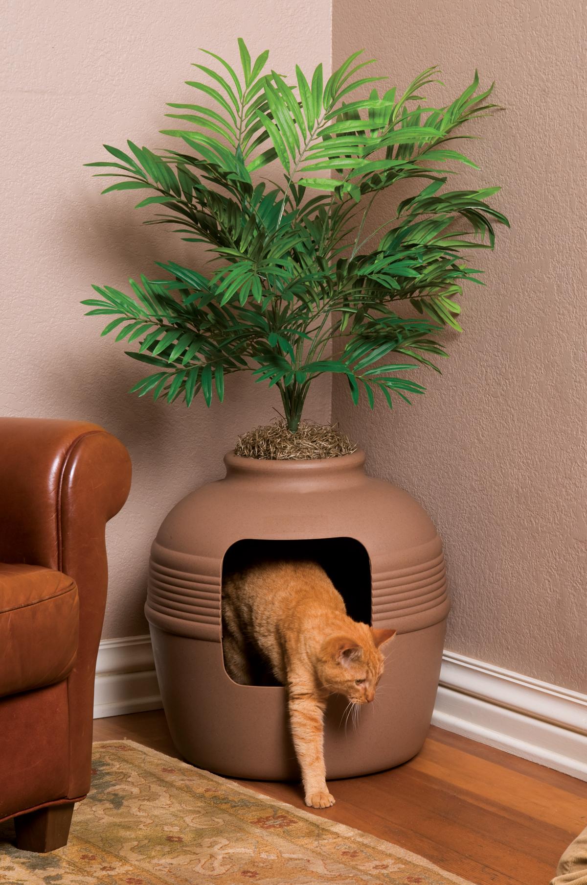 litter box plant