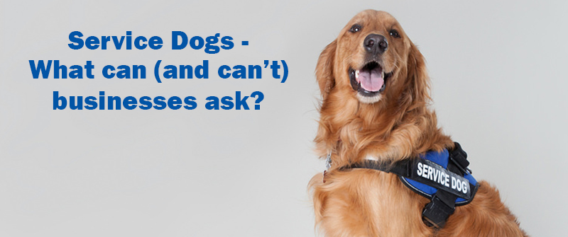 Taking Your Service Dog To A Business What Can And Can T They Ask Sitstay