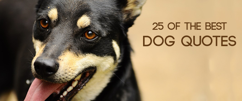 Dog Quotes Custom 48 Of The Best Dog Quotes
